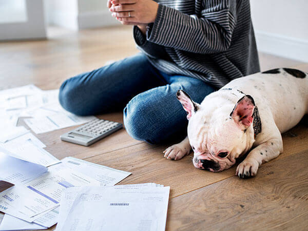 photo finances dog